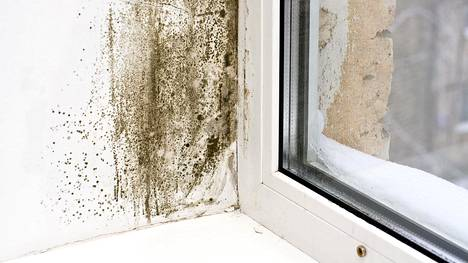 Kosteat ja leudot talvet lisäävät kosteusvaurion riskiä.