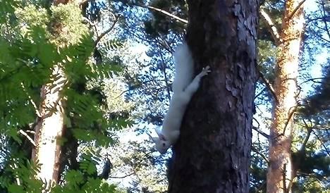 Albiino-orava kuvattiin Salossa.