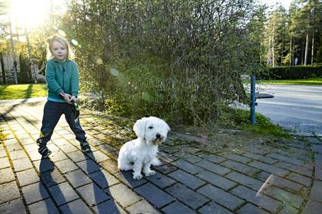 Julius Käkönen, 4, pääsi ulkoiluttamaan Roki-koiraa.