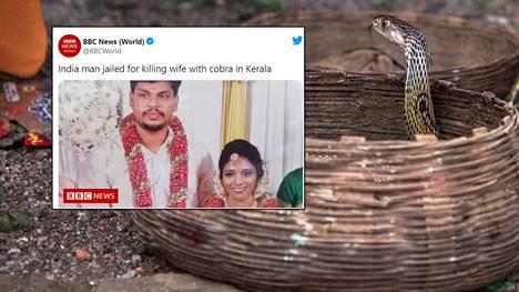 Intialainen mies surmasi vaimonsa kobralla. Tuomioistuimen mukaan hän oli yrittänyt jo aiemmin murhata vaimonsa ketjukyyllä.