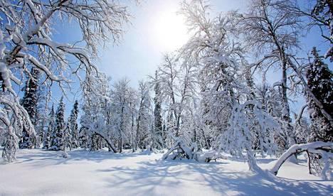 UKK-kansallispuiston Savukosken vaellusreitti on kokeneiden vaeltajien suosima.