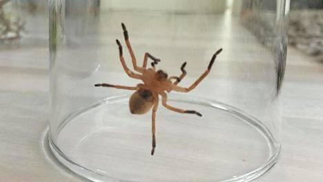 Suurikokoinen hämähäkki säikäytti koko seurueen.