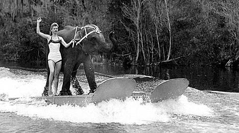 Kuva vuodelta 1958. Liz Dane vesihiihtää Queenie-norsun kanssa. 59-vuotias Queenie jouduttiin lopettamaan maanantaina.