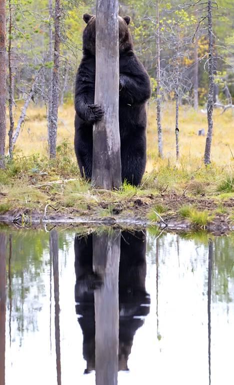 Esa Ringbomin kuva on kisan suomalaisedustus.