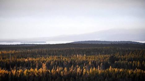Metsämaisema Rukalla Kuusamossa 24. marraskuuta 2018.