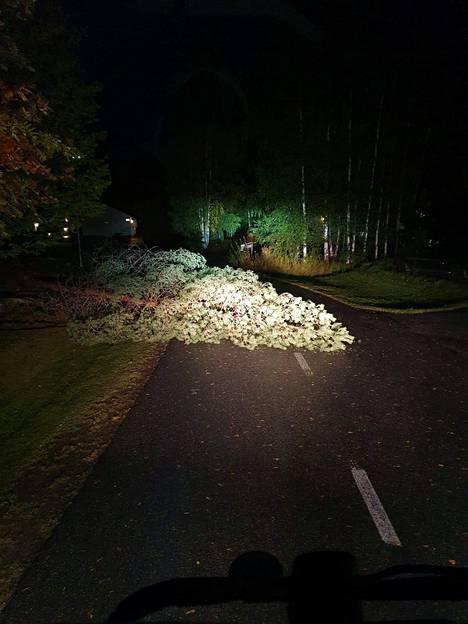 Kaatuneet puut ovat aiheuttaneet sähkökatkoja. Kuvan puu oli joutunut taittumaan tuulen voimasta Tanelinrannan asuinalueella Seinäjoella.