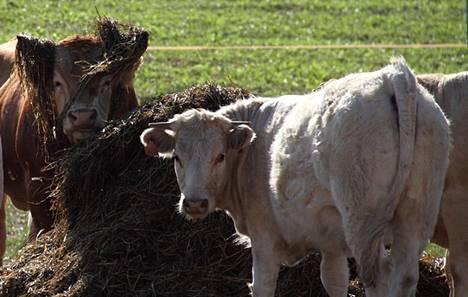 Anu Patrakka jätti kiireisen uran ja muutti Portugaliin maatilalle. Arki sujuu muun muassa maatilan töitä tehden. Kuva: Anu Patrakka