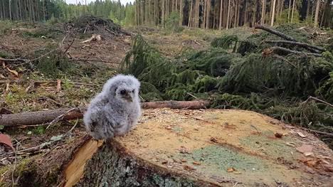 Tästä Jukka Tannerin ottamasta ja Facebookin Suomen linnut -yhteisöön laittamasta lohduttoman hellyttävästä kuvasta kaikki alkoi.