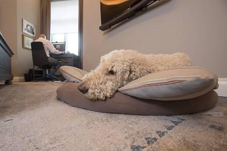 Työhuonetta Oreckilla ei ole. Hän on ratkaissut asian asettamalla työpisteen makuuhuoneeseensa. Deckard-koiralla on oma paikkansa isännän makuuhuoneessa.