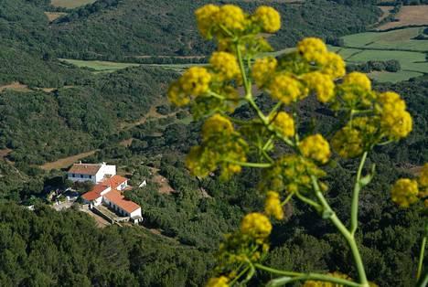 Valtaosa Menorcan kasvillisuudesta on ikivihreää. Kesällä on kuivinta ja karuinta.