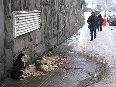 Moskovalaiset suhtautuvat koiramatkustajiin hyväntuulisesti ja jopa suojelevasti.