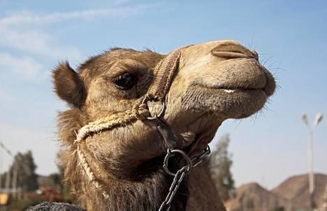 Lähi-idän ja Pohjois-Afrikan alue koetaan taas turvalliseksi ja sinne halutaan jälleen matkustaa, kertoo tiedotteessa SMAL.