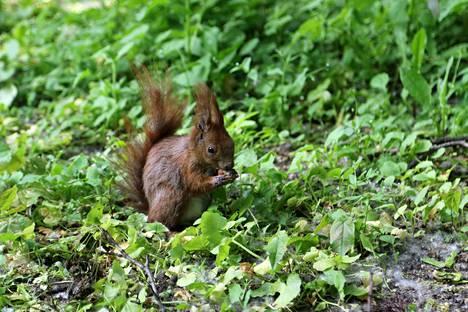 Puistossa voi ruokkia oravia.