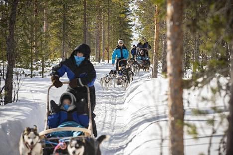 Kiinalaiset turistit nauttivat koiravaljakkoajelusta Rovaniemellä 26.3.
