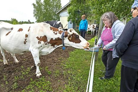 Hymy-koira paimentaa lehmät pian navettaan, mutta Anulla on vielä Impin ruokinta kesken.