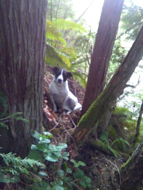 Daisy-koira haukkui, kunnes sen isäntä löydettiin.