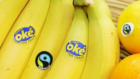 Lidl alkaa myydä vain Reilun kaupan banaaneja. Kuvan keskimmäisessä banaanissa Reilun kaupan merkki.