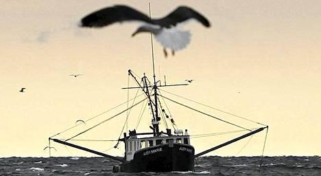 Katkarapujen kalastusta Mainenlahdella Yhdysvalloissa.