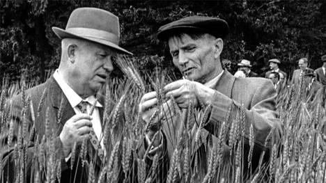 DokumenttiTrofim Lysenko (oik.) oli talonpoikaisneron maineessa Neuvostoliitossa. Tässä hän on tutkimassa tähkiä Nikita Hrushtshovin kanssa, josta tuli Neuvostoliiton johtaja Josif Stalinin kuoleman jälkeen.