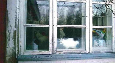 Leskirouva oli lastensa pyynnöstä muuttanut kotoaan kirkolle. Lemmikit jäivät vanhaan taloon.