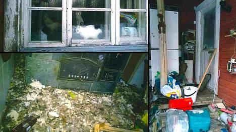 Talosta löytyi lauma arkoja ja huonokuntoisia kissoja, joista monet jouduttiin lopettamaan.