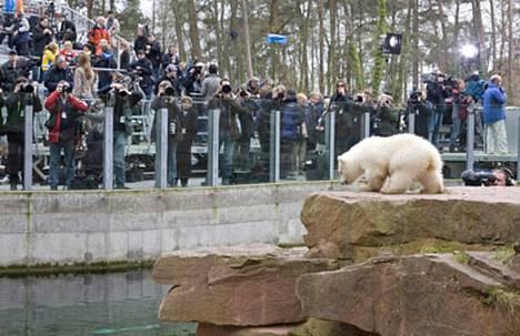 Jääkarhunpoikanen Flocke (suom. Lumihiutale) esiintyi tiistaina yleisölle.