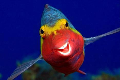 Kalan hymy vei kisan finaaliin.