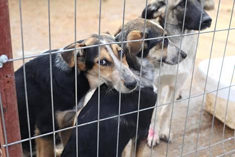 Viipurin koiratarhassa Anelma ja Unelma olivat erottamattomat.