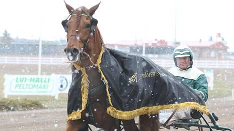Pekka Luukkosen Lissun Eerikki voitti kauden edellisen kylmäveristen GP:n helmikuussa ja on taas viivalla.