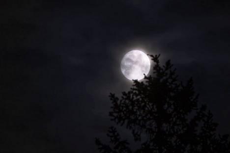 Metsästäjän kuu pilkisti puun takaa.