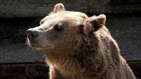 Karhun Nimiä