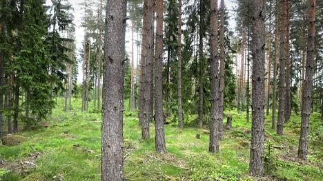 EU liitti ympäristöasiat vahvasti metsästrategiaan.
