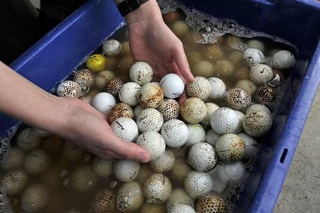 Viljami liottaa ensin palloja, jotta voi alkaa jynssätä palloja myyntikuntoon.