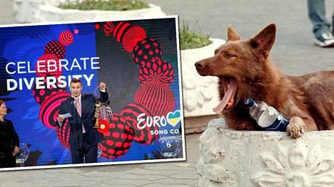 Kiovassa järjestettävät Eurovision-laulukilpailut uhkaavat kaupungin kulkukoiria.