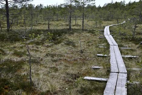 Tammelan Torronsuon retkeilyreitin pitkospuut.
