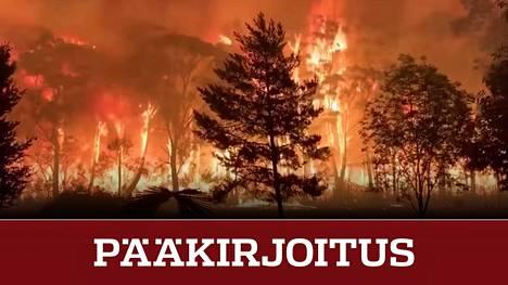 Australian palot aiheuttavat valtavia taloudellisia vahinkoja ja peruuttamatonta tuhoa luonnolle.