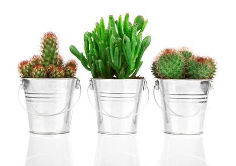 Kasveille kannattaa valita edellisen vinkin mukaan ruukku, joka jatkaa muun kodin värimaailmaa.