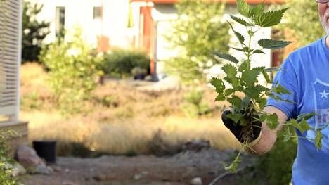 """Erkki kertoo kikan, jolla puutarhasi kasvit voivat paremmin: """"Voi aiheuttaa närästystä rivitalossa"""""""