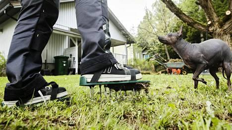 Jos ruohikon maaperän pintakerros on todella kova, voi kuivettuneen kerroksen rikkoa esimerkiksi piikkirullalla tai piikkikengillä.