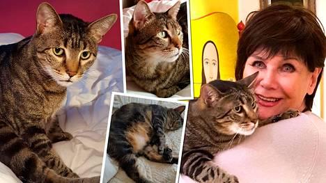 Eetu-kissa pelasti Pirkko Arstilan mielenterveyden – pojan kuolema syöksi pohjalle