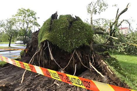 Oulussa ukkospuuskien yhteydessä puhaltavat tuulet kaatoivat paljon puita.