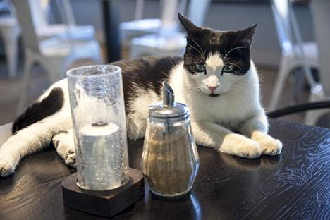 Kissakahvila Nurriin mentäessä on varottava, ettei joku kahvilan asukeista livahda ovesta ulos.