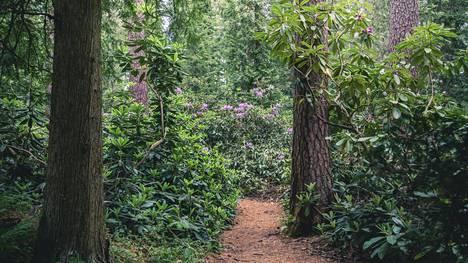 Vuoden retkipaikaksi on valittu Kouvolassa sijaitseva Arboretum Mustila, joka tunnetaan muun muassa erilaisista metsiköistään ja alppiruusuistaan.