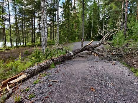 Tielle kaatunut puu hidasti saunasta tulleiden naisten kotimatkaa Espoossa.