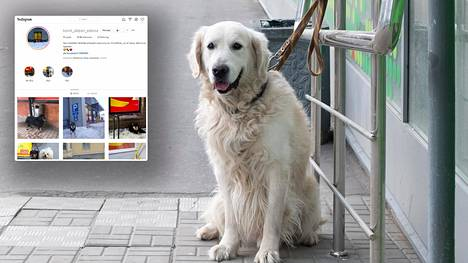 Kuvituskuvan koira odottaa omistajaansa kaupan edessä. Kuvakaappaus on Koirat Alepan edessä -tililtä.