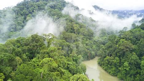 Brunei on vaurastunut öljyllä, eikä metsiä ole hakattu palmuöljyplantaaseiksi. Noin puolet maan pinta-alasta on alkuperäisen sademetsän peitossa.