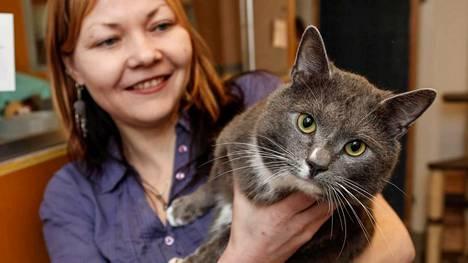 HESY:n kissojen vastaanottokoti Pakilassa. Erja Veivo esittelee Ketku -kissaa, joka löysi itselleen HESY:n kautta uuden, pysyvän kodin viime keväänä.