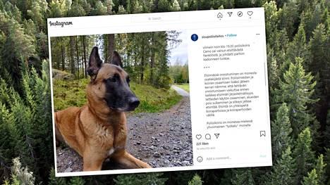 Poliisikoira Camo löysi metsään eksyneen Kangasalan Kuhmalahdelta.