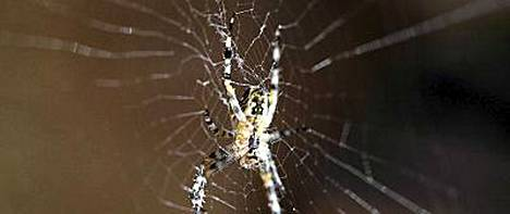 Tarina ei kerro, millaista hämähäkkiä brittimies yritti tappaa. Tiedossa ei ole sekään, jäikö ötökkä henkiin räjähdyksen jälkeen.
