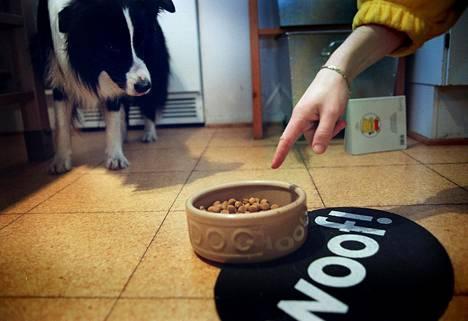 Koirien ruokkimiseen ja eläinlääkäriin uppoaa omistajilta paljon rahaa. Jos hinnat nousevat, onko koirista tulossa luksusta?